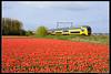 NSR-8728_Hil_22042017 (Dennis Koster) Tags: ns nsr trein personentrein passagierstrein hillegom bollenveld tulpen virm 8728