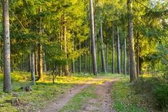 in the wood (Burnett0305) Tags: a7ii a7markii a7mii baum blatt blätter bäume gelb grün landscape landschaft landschaftnatur laub natur nature pflanzen sel55f18z sonyalpha7ii sonysonnartfe55mmf18za wald country foliage forrest green leaves plants tree wood yellow