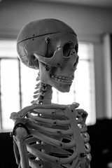 Skelly (sirbenksi) Tags: skeleton anatomy biology bw sony rx100m5 rx100v rx100