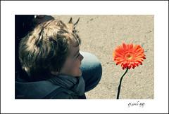 25 aprile 1945 - Festa della Liberazione (alesolofoto) Tags: 25aprile festaliberazione italia fiore gerbera partecipazione resistenza