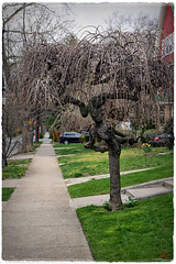 """""""Mystry Sculpture On A Bad Hair Day...""""  ;-) (Alexxir) Tags: ditmaspark spring 2017 cherryblossom sakura cherryblossomfestivalnyc2017 sakuramatsuricherryblossomfestivalinbrooklyn nyc newyork newyorkcity flowers redflowers yellowflowers bloom blooming 2017magnoliablossomfestival brooklynmagnolia magnolias pinkflowers trees streets brooklynflowers brooklynditmasparkflowers whiteflowers bushes rosebushes dandelions alleys perspectives birds victorianhouses homes vintage flowervase vases cosyhomes subway subwaycars quietandpeaceful serene relaxing dreamy desolate contrast park garden vegetation colors colorful colorexplosion beautiful beauty incredible mesmerizing enveloping pinksnow buds beautifulhouses untouched nature mothernature pavement sidewalk doors entrance bedroom sleeping sleepy sunny bright inthemiddleofbrooklyn"""