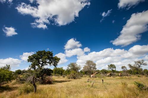 KrugerParkREIZ&HIGHRES-38