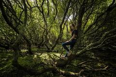 El bosque secreto............ (T.I.T.A.) Tags: bosque forest laguna lagunabodeira ogrove sanvicentedogrove chica girl sauces laradeza bosqueencantado