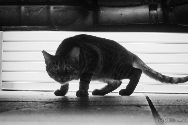 Today's Cat@2013-07-22