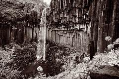 The Black Falls (claustral) Tags: water monochrome waterfall iceland columns foss basalt d800 svartifoss