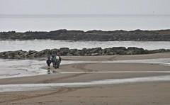 Horsing Around (Bricheno) Tags: horse beach island scotland clyde escocia arran isleofarran szkocja schottland scozia blackwaterfoot cosse firthofclyde  esccia kilbrannansound  drumadoon scotlandinminiature  bricheno scoia