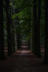 DSC_6584-1 (coopertje) Tags: autumn fall herfst nederland thenetherlands bos veluwe veluwezoom hogeveluwe