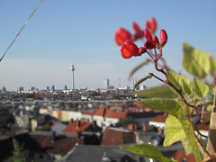 Floue-unfloue | I see two (LetsLetsLets) Tags: panorama flower berlin photoshop fuzzy roofs tvtower berlim setembro flr floue telhados desfocado 2013 torredateleviso doubledvision