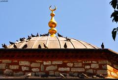 Kαrαdαvud Pαşα Cαmii (gLySuNfLoWeR) Tags: pigeon muslim islam istanbul mosque ottoman cami islamic huzur güvercin üsküdar osmanlı müslüman