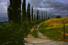 Una strada toscana (Antonio Cinotti ) Tags: road sky italy panorama clouds nikon strada italia nuvole day cloudy sienna tuscany siena toscana drama tamron landsacape countryroad stradadicampagna montalbuccio d7100 nikond7100