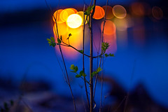 Bokehville (Arutemu) Tags: light night canon lens lights bokeh 85mm nighttime 夜景 401 helios 町 夜 川 河 夜光 暈け