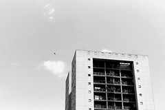 (Synthesis of classic forms) Tags: italy roma bird film architecture analog concrete nikon projects beton l38