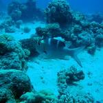 The Three Corners Fayrouz Plaza Beach Resort Marsa Alam thumbnail