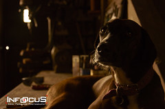 Negra (Ariel Ferulano) Tags: dog retrato perro baja negra clave vision:dark=0618 vision:sky=0817