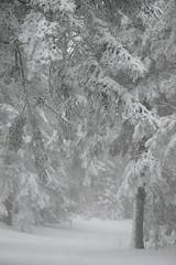 Hiver sur l'Aigoual (Michel Seguret thanks you all for + 8.1 M views) Tags: schnee winter white mountain snow france cold blanco berg forest montagne season nikon hiver selva neve invierno neige montaa kalt blanc froid frio fort gard d800 saison weis inverna michelseguret