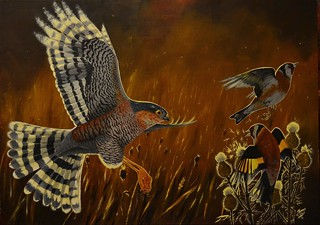 Surprise tactics - Sparrowhawk painting ~ explored