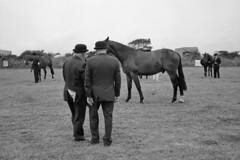Flap (Simon_Bates) Tags: show leica ireland horses bw film monochrome 35mm kodak photojournalism documentary rangefinder summicron agriculture wexford m6 equestrian 2010 reportage judges simonbates killag monomonday