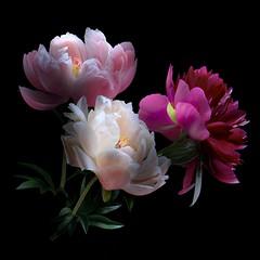 Peonies Trio (Pixel Fusion) Tags: peony flower flora nature macro nikon d600