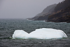 Iceberg in Torbay Bight 1 (LongInt57) Tags: ice iceberg floating water ocean bay inlet fog raining rain rock shote trees forest cold springtime white blue green grey gray brown nature landscape scenic torbaybight torbay newfoundland canada sea atlantic