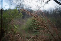 drizzled (severalsnakes) Tags: 365 kansas m3528 pentax saraspaedy shawnee shawneemissionpark k1 manual manualfocus outdoor
