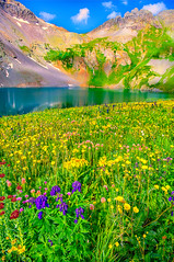 Floral Carpet II (William Horton Photography) Tags: alpineavens clearlake clearlakeroad fs815 kingscrown leafyarnica monkshood peak13309 queenscrown rockymountains rosecrown sanjuanmountains sedum stonecrop wildflower hanginglakes mountainlake wildflowersbistort durango colorado unitedstates us