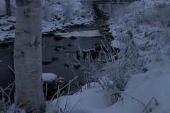 _MG_0430.jpg (jaha75) Tags: frost björk bäcken is sundom kallt