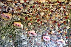 Rozendaal, tuin met schelpenfontein van kasteel Rosendael, Gelderland Nederland 2017 (wally nelemans) Tags: rozendaal tuin garden schelpenfontein fontain kasteel castle rosendael gelderland nederland holland thenetherlands 2017