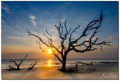 A tree in Jekyll Island (jeannie'spix) Tags: boneyardbeach treejekyllisland charleston jekyllisland tree sunrise charleston2017 jekyll 2017 driftwoodbeach