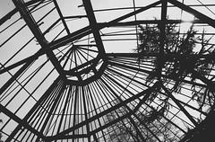 Wally gardens greenhouse (Shadow Badger) Tags: d5200 nikond5200 nikon northerner england blackandwhite bw northwest tree warrington waltongardens greenhouse