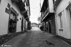 Just before the danger. (A. Muiña) Tags: animales gatos felinos cats felines paisaje landscape naturaleza nature street calle rústico byn bw nikon800 arquitectura piedra