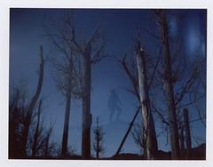 Here's to more adventures (Celina Innocent) Tags: fuji film silk instant polaroidweek doubleexposure trees roidweek peelapart