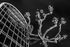 Bald (GH#Photography) Tags: canon eos 600d architecture sw schwarz weis black white gebäude linien bäume himmel wolken nacht langzeitbelichtung kontrast perspektive