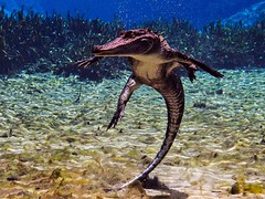 Disco Alligator Close-Up (Phil's 1stPix) Tags: olympus omd em5 alligatormississippiensis americanalligator alexanderspringsalligator alligatorunderwater alligatorcloseup ocalanationalforest alexandersprings alexanderspringsrecreationarea floridasprings nationalforest usnationalforest lakecountyflorida centralfloridarecreation centralfloridasprings floridanature floridawildlife realflorida naturalecosystem geotag geotagged wildflorida phils1stpix firstpix reptile photoscape creativecommonsnature alligatorencounter underwateralligatorcloseup siwmmingalligatorunderwater taxonomy:binomial=alligatormississippiensis swimmingalligator alligatoracrobat adobelightroom6 agilealligator dancingalligator discogator