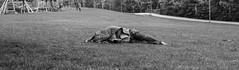 Dormendo_2 (david.tomasi) Tags: sleeping park parco dormire dormendo dorme schläft schlafen südtirol bozen bolzano south tyrol soutthyrol altoadige sudtirolo talvera prati talfer sw bw monochrome monochrom bianco nero schwarz weiss weis black white