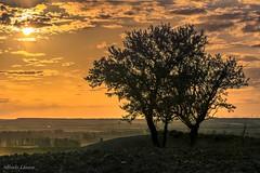 Cuando el sol empieza a caer (allabar8769) Tags: campos camposdecastilla naturalezarioalardelrey paisaje sanmartídevalbení valladolid atardecer árboles