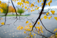 the tree's view (KieraJo) Tags: leaves orange fall autumn green yellow tree wide angle below backlit sun natural lighting canonef24mmf14liiusm l lens canon 5d mark 3 iii 5d3 fullframe