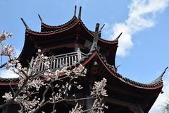 Ume garden 02 (itsuo.t) Tags: flower blossom umeblossom japaneseapricot umegarden plumorchard japaneseapricotorchard 梅公園 梅の花 世界の梅公園