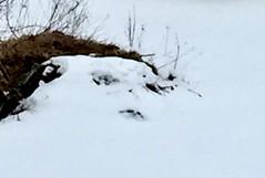 Do you see her face:-)) (peggyhr) Tags: peggyhr imagination face snow island frozenlake bluebirdestates