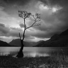 Tranquility (-- Q --) Tags: lakedistrictnationalpark buttermere englishlakes cumbria haystacks tree lake landscape fleetwithpike gatesgarth nationaltrust blackwhitephotos lee09softgrad lee06softgrad marumidhgcpl monochrome water clouds atmosphere