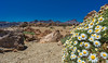 2016.05-Teneriffa-174-BA (FV1405) Tags: 2016 spanien teide teneriffa kanarischeinseln laorotava canarias es kanarische inseln blumen flowers margeriten blüte himmel