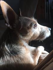 Sun Poppy (CraftyBev) Tags: pet sun dog poppy
