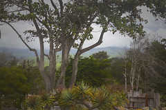 Cambria, CA (Exdeltalady) Tags: cambria ca countryside wine tasting landscape vegetation