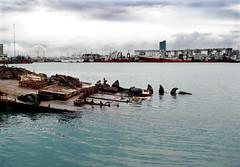 El descanso de los losbos marinos (Mariano Castellanelli Photography) Tags: puerto mar del plata lobos marinos