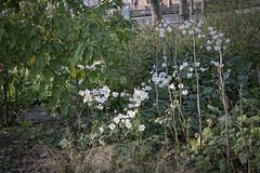 _DSF0052 flowers 4r (CoriJae) Tags: batterypark hdr broadway downtownmanhattan newyork