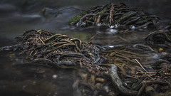 The Little Things (keith_shuley) Tags: cibolocreek stream creek water twigs morning texas hillcountry olympus