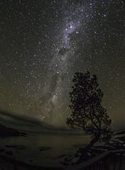 Banksia shadowed (OzzRod) Tags: pentax k1 smcpentaxda1017mmf3545fisheye astrophotography stars constellation night lightpainting milkyway southerncross emu pentaxart singleinapril2017