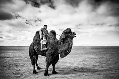 .[the] camel polo player. (Shirren Lim) Tags: landscape blackandwhite monochrome outdoor mongolia camel portrait winter wilderness