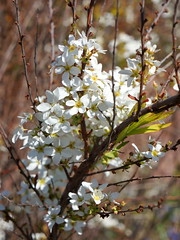 (elalex2009) Tags: towerhillbotanicgarden botanicgarden springtime spring springflowers bokeh