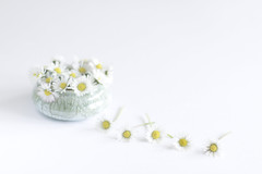 5/30: Find beauty in the small things... (judi may) Tags: april2017amonthin30pictures daisies flowers highkey white whitebackground bowl green minimal simplicity simple negativespace canon7d 50mm stilllife