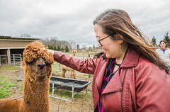 medina-7719 (FarFlungTravels) Tags: alpaca animal farm medinacounty onefineday shear wool